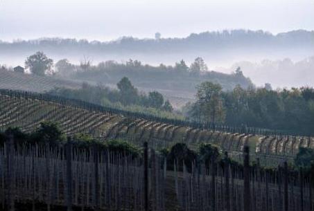 wijngaarden Braïda