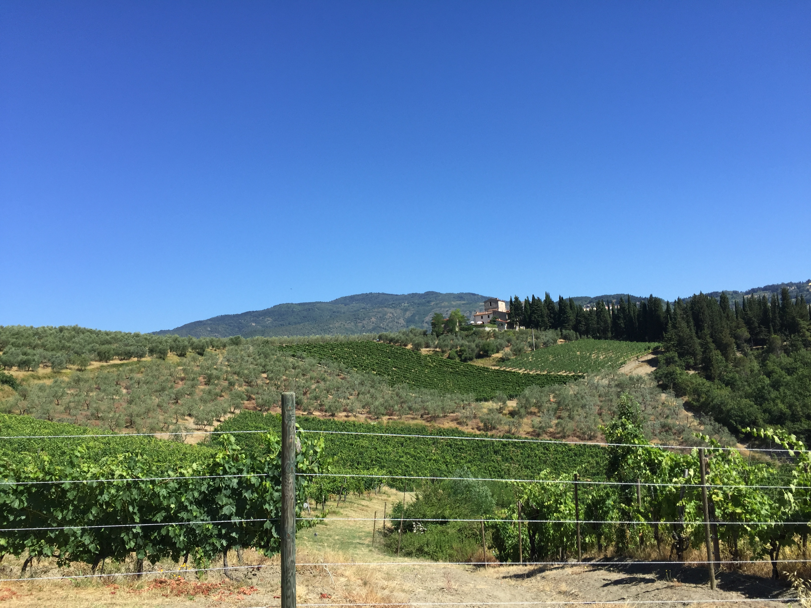 wijngaarden-i-pini-en-il-corto